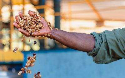 Honey Process – Entenda o que é e seus diferenciais